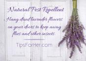 Natural Pest Repellent